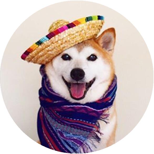 Shiba Inu les chiens les plus kawai